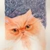orange_cat